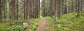 Nyrölä nature trail 4.jpg