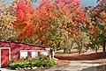 Oak Glen Apple Orchard 11-12 (15466230420).jpg