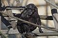 Oji zoo, Kobe, Japan (11741847174).jpg