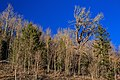 On Wheeler Peak scenic drive, Great Basin National Park, Nevada (8124273105).jpg