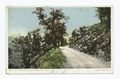 On the Road to Lick Observatory, California (NYPL b12647398-67875).tiff