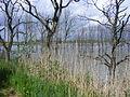 Onder gelopen tuin Biesbos ivm met ruimte voor de rivier.JPG