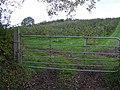 Orchard at Tullygarran - geograph.org.uk - 600517.jpg