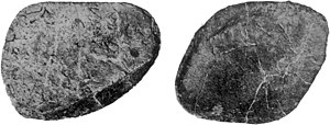 Ankylosaurus - Possible back osteoderm (AMNH 5895) in outer and inner view