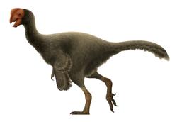 Oviraptor Restoration.png