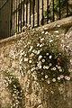 Oxford flowers - panoramio.jpg