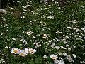 Přírodní park Baba488.jpg