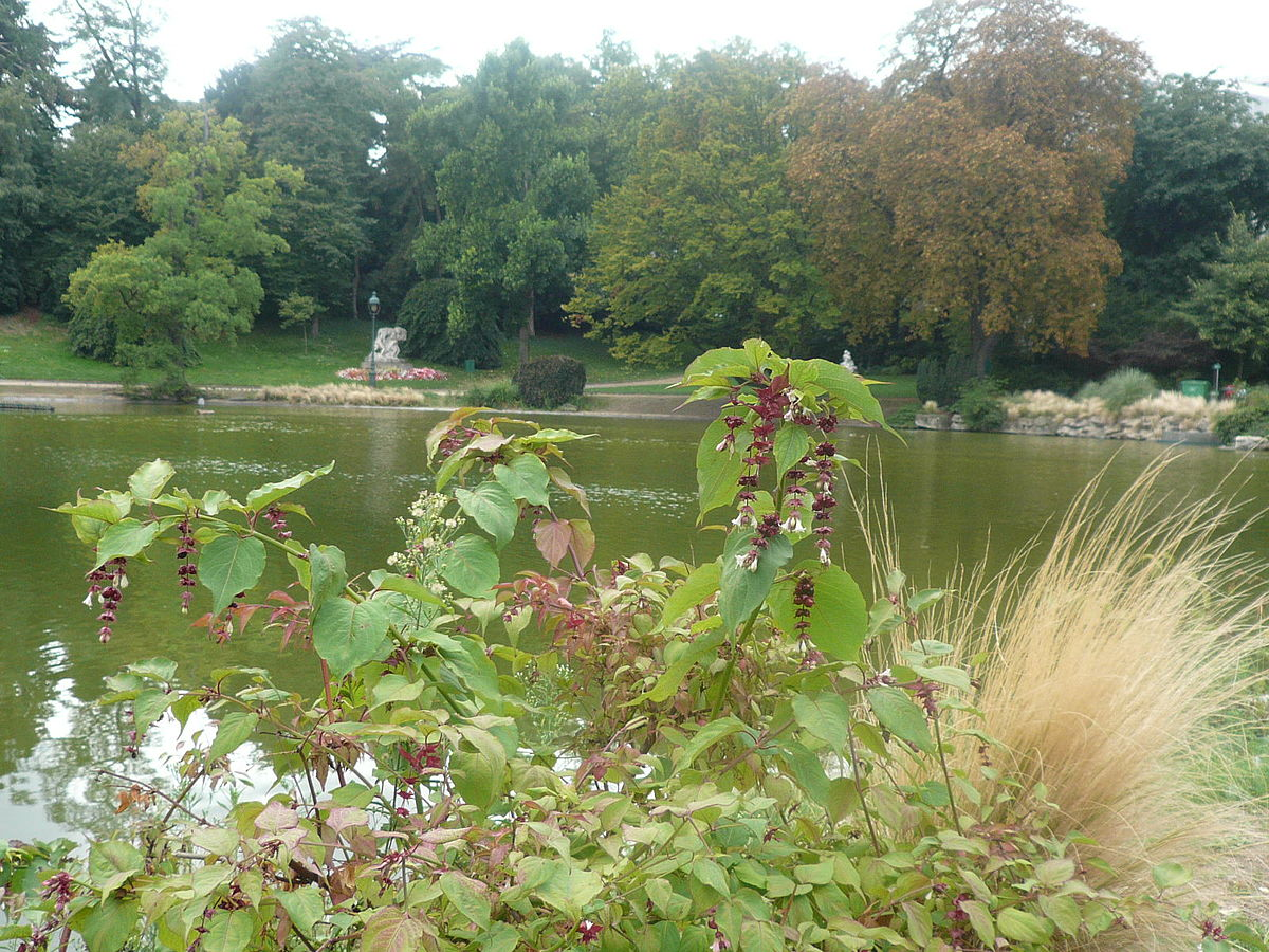 P1060001 Flore et lac au parc Montsouris.JPG