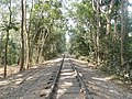 P8 Lawachara National Park, In Moulovibajar, Bangladesh.jpg