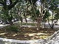 PRAÇA CLAUDIO ANTONIO ANJOLETTO-JARDIM OLAVO BILAC, SÃO BERNARDO DO CAMPO - SP, BRASIL - panoramio (1).jpg