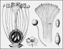 Chemotropism - Wikipedia