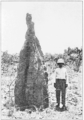PSM V85 D226 Termite nest prince of wales island torres straits.png