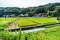 Paddy field in Wakayama City, Wakayama Prefecture; August 2016 (01).jpg