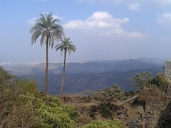 Palm trees on Mountains.jpg