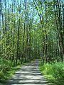 Parc-nature du Bois-de-l-ile-Bizard 68.jpg