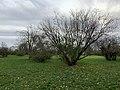 Parc Coteaux Avron Neuilly Plaisance 29.jpg