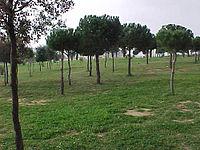 Parque G-4.jpg