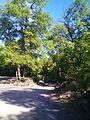 Parque Nacional 7 Tazas, Región Del Maule, Chile - panoramio (3).jpg