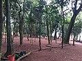 Parque da Cidade - Jundiaí - panoramio (94).jpg