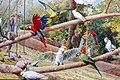 Parrots Post Card UK.jpg