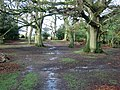 Path through oaks and holly - geograph.org.uk - 335123.jpg