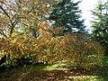 Paysage d'automne - panoramio.jpg