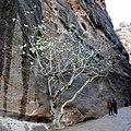 Petra, Canyon - panoramio.jpg