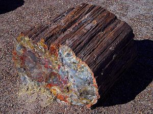 Petrified wood - Petrified log at the Petrified Forest National Park