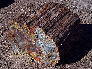 Fossil wood wood that is preserved in the fossil record