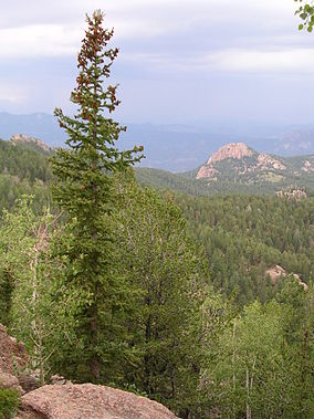 Pike National Forest.jpg