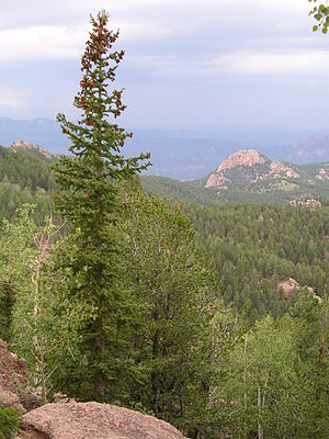 Pike National Forest - Near Devil's Head Lookout