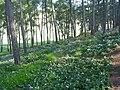 PikiWiki Israel 11812 cyclamen hill near kibbytz galed.jpg