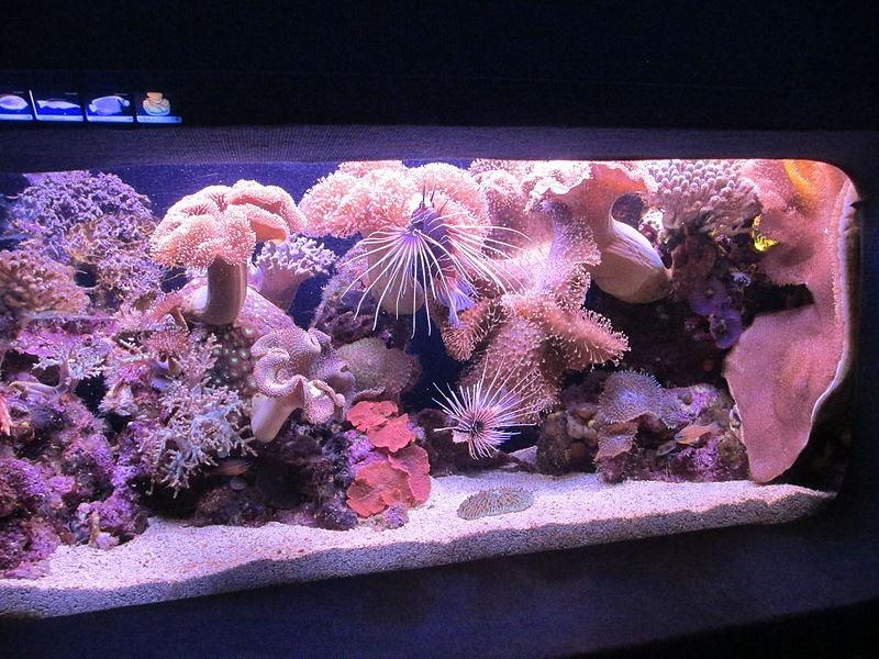 זהרון מקרין ואלמוגים