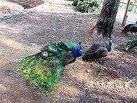 PikiWiki Israel 53068 wildlife animals.jpg