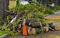Pile of logs from clearing downed oak tree after May 2018 derecho, Walden, NY.jpg