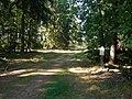 Pincerno - Göhrde - Forstweg.JPG