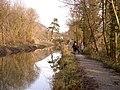 Pine tree and bridge to Ynys-Arwed Farm - geograph.org.uk - 110243.jpg