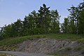 Pini e roverelle - panoramio.jpg