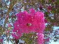 Pink Tree Flowers 2.jpg