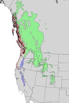 Mapa de distribución de subespecies de Pinus contorta 2.png