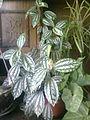 Planta de interior.jpg