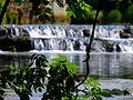 Plante et rivière (Arbois).jpg
