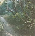 Pogonip Lookout Trail in woods 1999.jpg