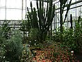 Poland. Warsaw. Powsin. Botanical Garden 141.jpg