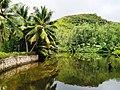 Pond near Anse Lazio Praslin Seychelles.jpg