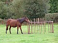 Pony in a field south of Denny Lodge, New Forest - geograph.org.uk - 267062.jpg