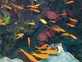 Port Ghalib march 2006-0181.jpg