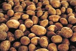 een groep onderuitgezakte zakaardappels