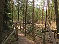 Prügelsteg im Naturpark Heidenreichsteiner Moor 2009-04 1.jpg