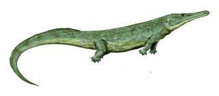 Stereospondylomorpha taxon of amphibians